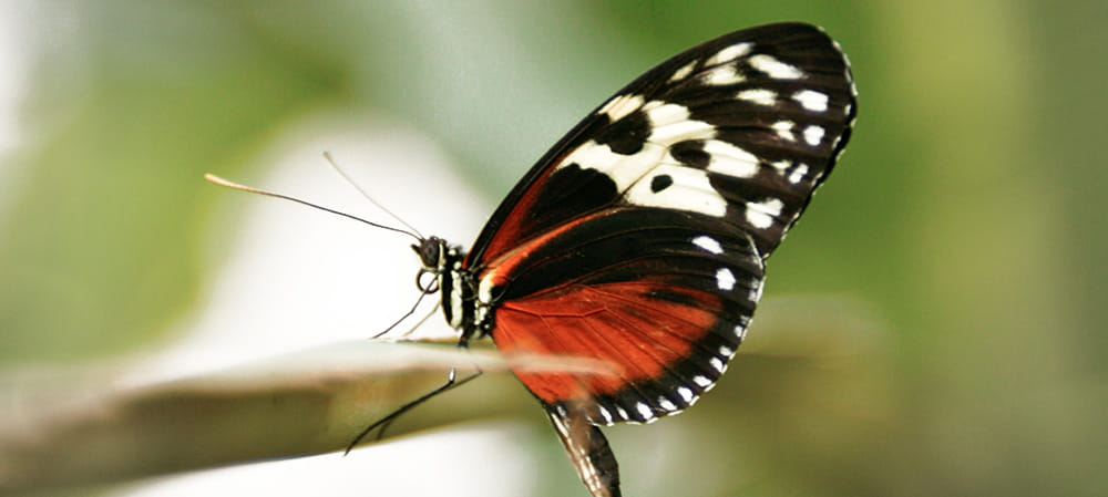 butterfly sat on branch